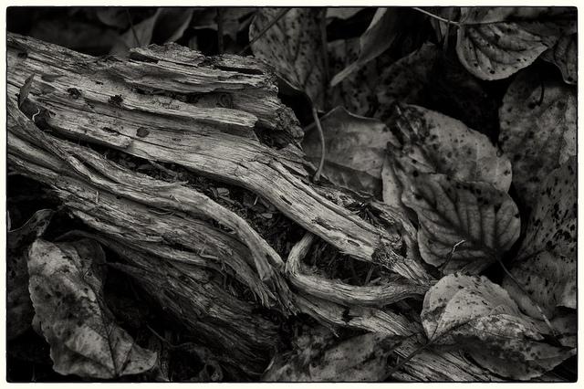 Patterns of Decay  (c) JM Schreiber, 2011