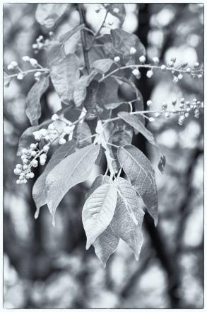 Spring in silver